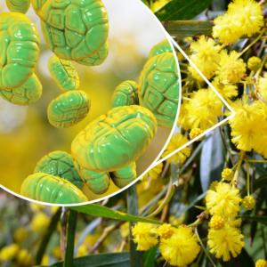 pollen-structure
