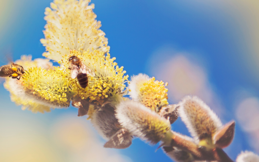 The Structure of Pollen and Why It's a Beast for Allergies