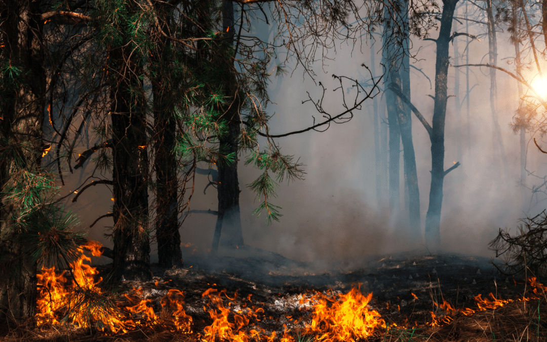 What Wildfire Smoke Can Mean For Your Lungs