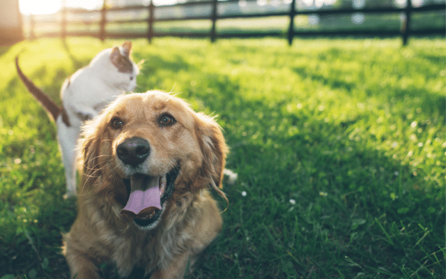 Relief from Pet Allergies!